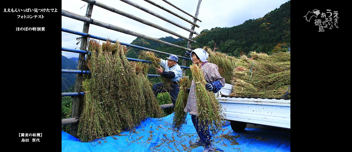 ほのぼの特別賞1「蕎麦の収穫」島田賀代