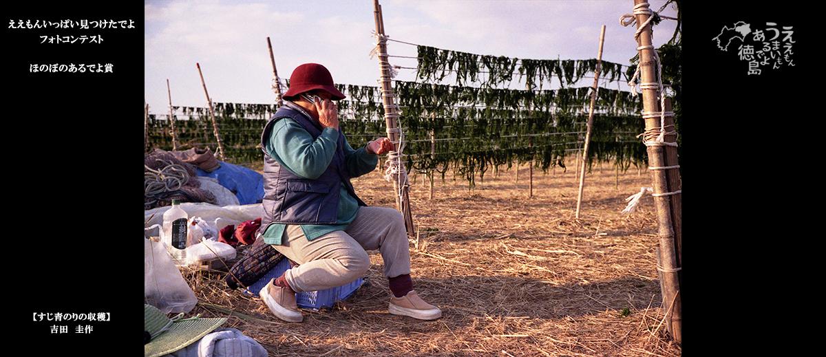2019ほのぼのあるでよ賞「すじ青のりの収穫」吉田圭作